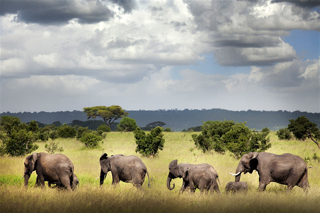 le parc national de Ruaha- reserves naturelles tanzanie - animaux sauvages d'afrique