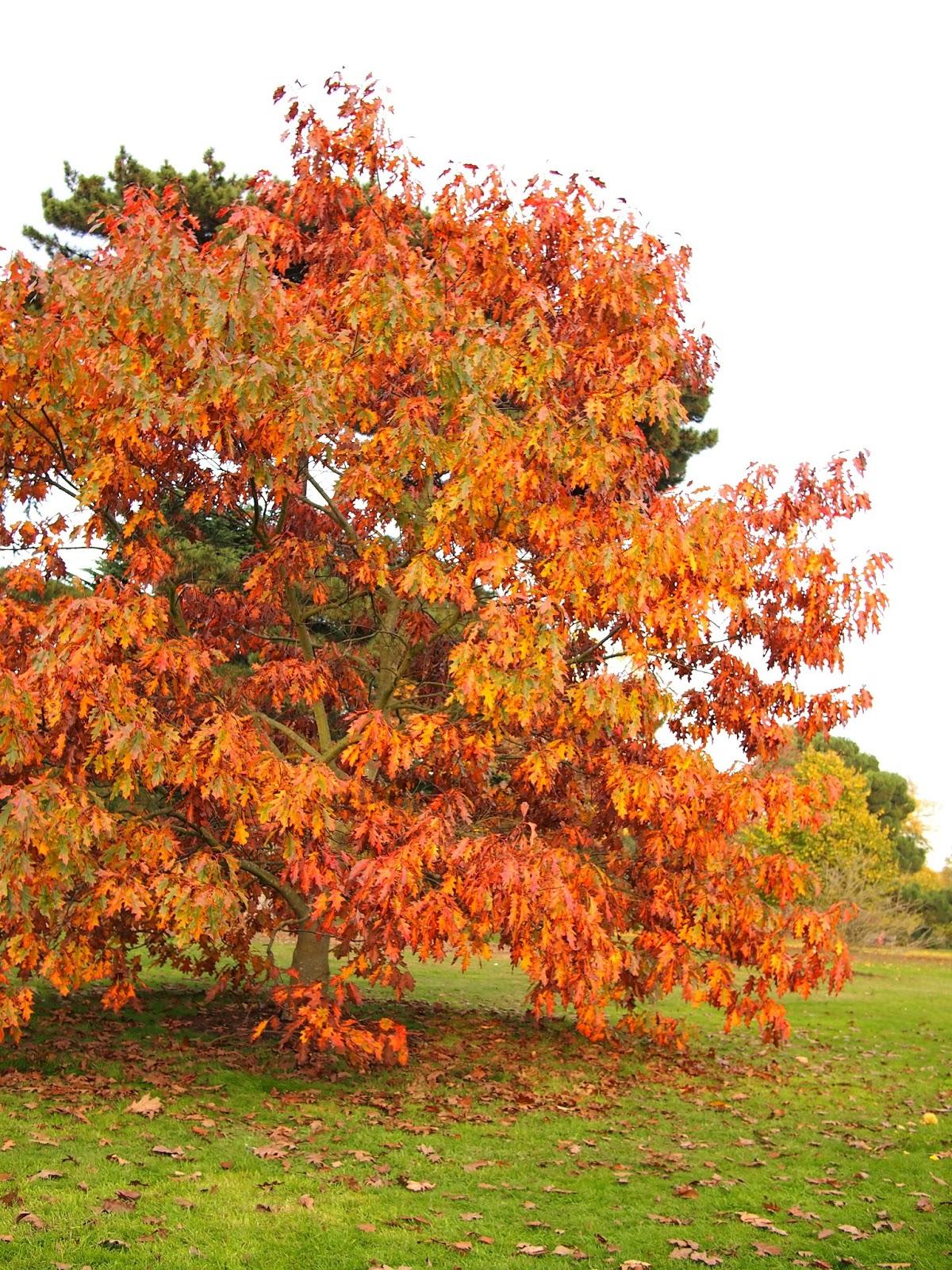 Living in London: Celebrate autumn