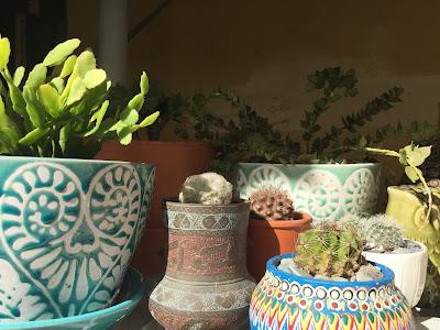 xeriscape landscaping, custom planters, cactus, cacti, succulent, garden design Miami