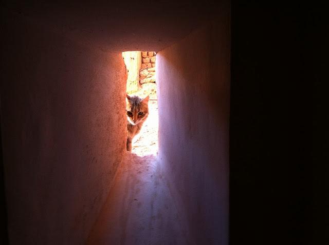 kasbah de Taourirt gatito