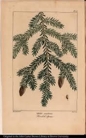 Homeopatas Dos Pés Descalçoshomeopaths Of Barefoot Abies