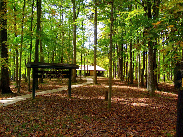 Yellowwood State Forest Picnic Area and Campground