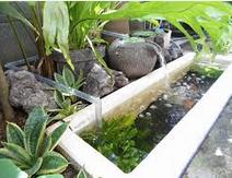 Cara Memelihara Ikan Koi dengan filter kolam