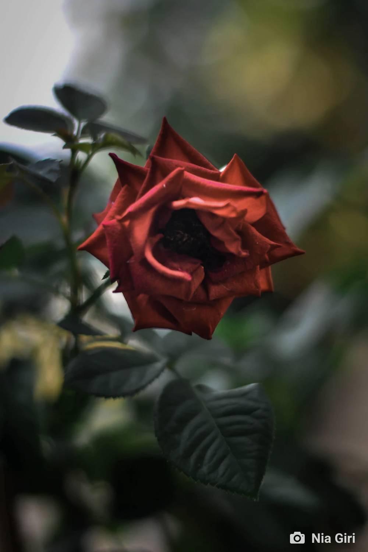 ambiente de leitura carlos romero literatura poesia paraibana rui leitao licao da rosa espinhos da alma
