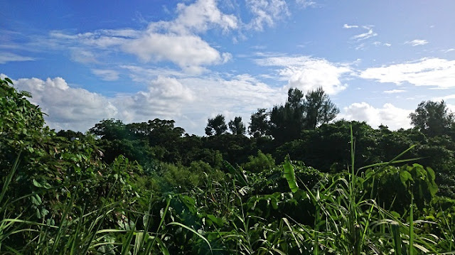 シムクガマの森の写真