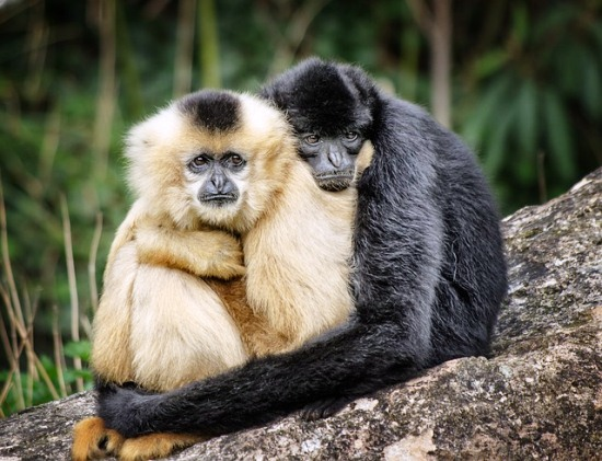 Contoh Cerita Binatang Kera dalam Bahasa Inggris dan Terjemahan