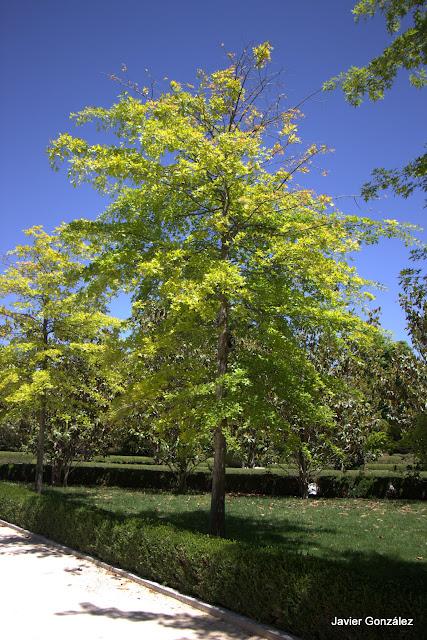 Parque del Retiro de Madrid. Itinerario 2.Del Bosque del Recuerdo al Huerto del Francés