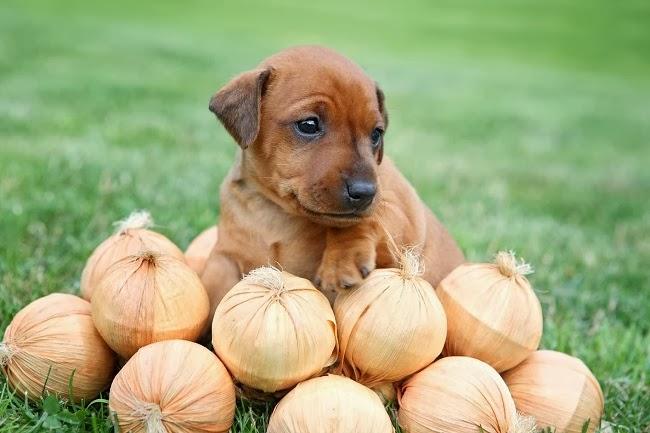 Zakaz handlu psami na targowiskach