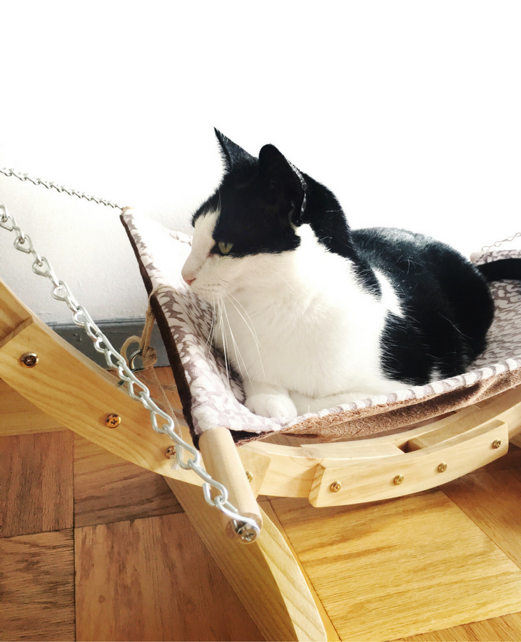 Practicing self care doesn't have to be bard or take up too much time. Click to read how my cat Max inspired me to practice more self care on a daily basis, plus tips on how to do it yourself.