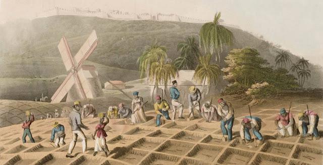 Plantaciones e historia economica