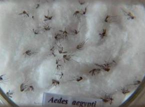 Brasil sonega amostras de zika para pesquisa no exterior, dizem cientistas