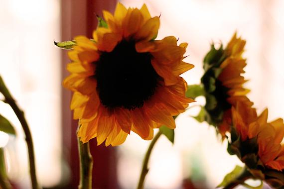 Sunflowers Baby Shower