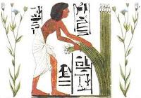 زراعة الكتان وحصاده وهو يمثل القطن الان