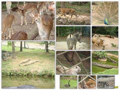 Zoológico de São Paulo - Zoo Safari