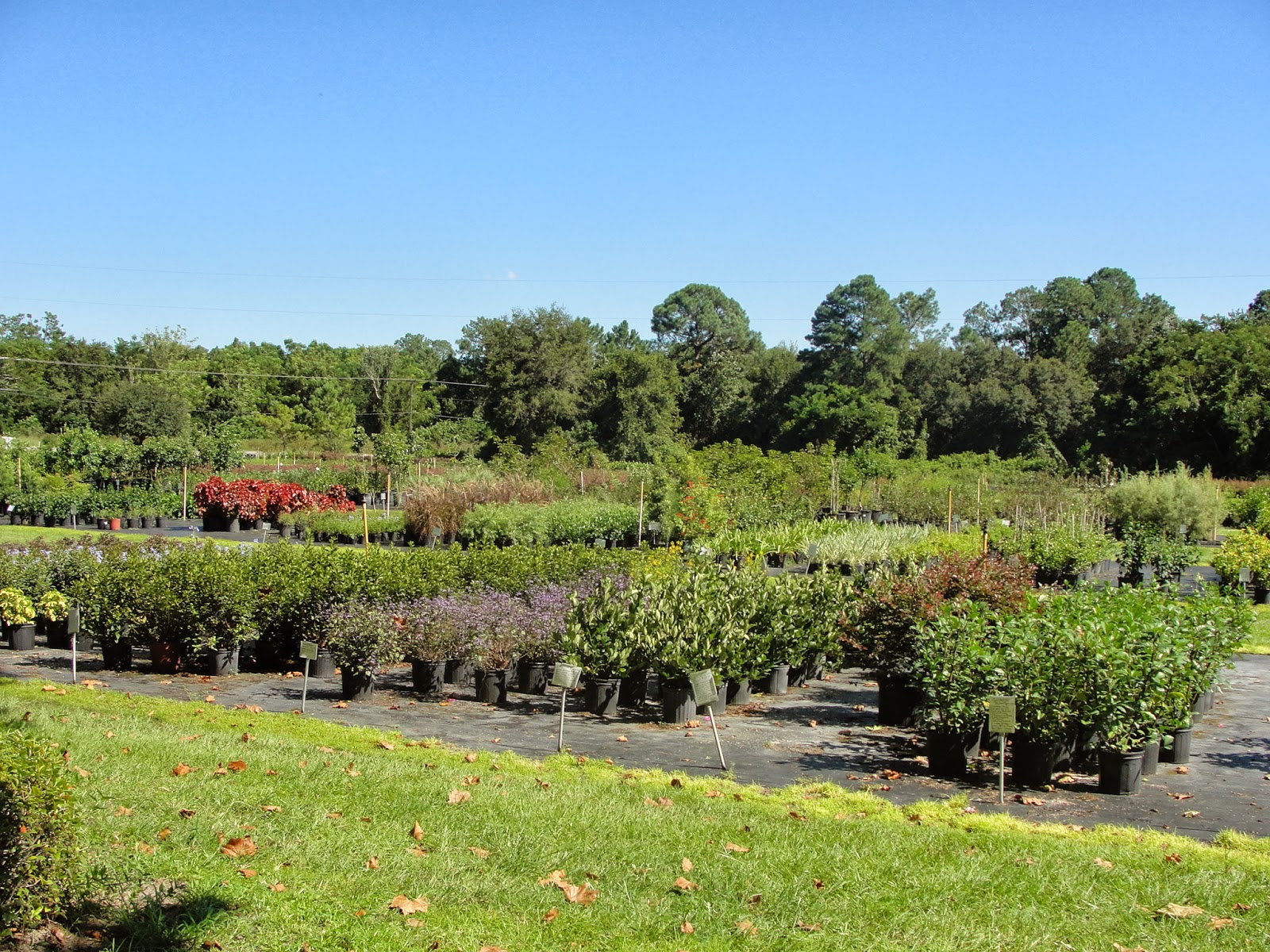 The Plants Are In Excellent Shape And The Prices Are Lower Than The Local Box Stores And Generally Larger Too