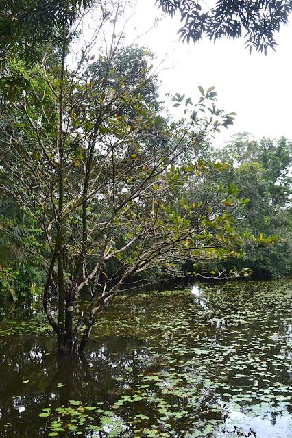 Guyane, jardin botanique, bois de rose, fleurs