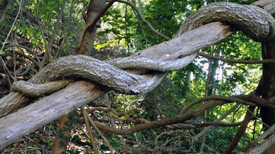 Serpent Tree