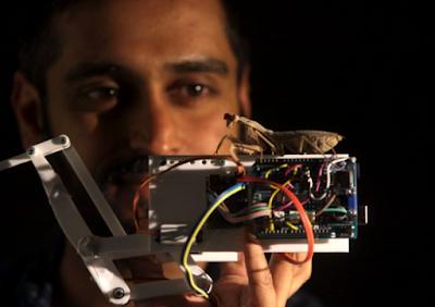 Gunakan Kacamata, Belalang Sembah Mampu Melihat Benda Tiga Dimensi (3D) Yang Manusia Tak Mampu Melakukannya