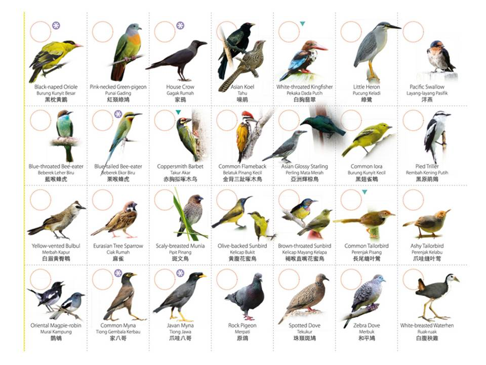 Bird breeds a-z - Microdermabrasion scrubs
