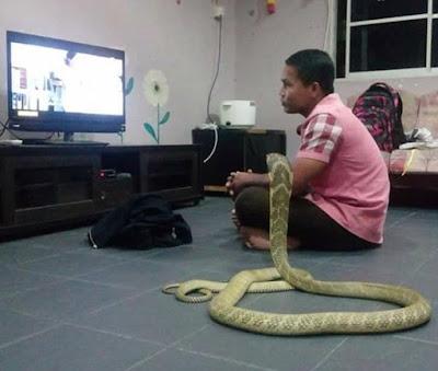 Man Marries A 10ft Cobra He Believes Is His Reincarnated Girlfriend (Photos)