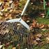 شركة تنظيف حدائق بينبع