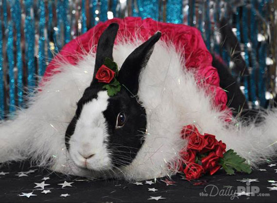 See how sparkle bunny rings in the new year with a red cape, roses, and sparkles
