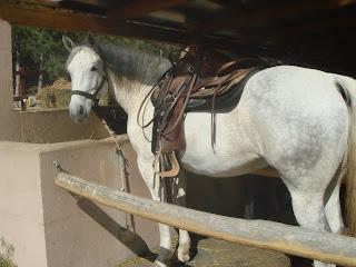 El Bronco, Unkari, Riitta Reissaa, Horsexplore, lännenratsastus