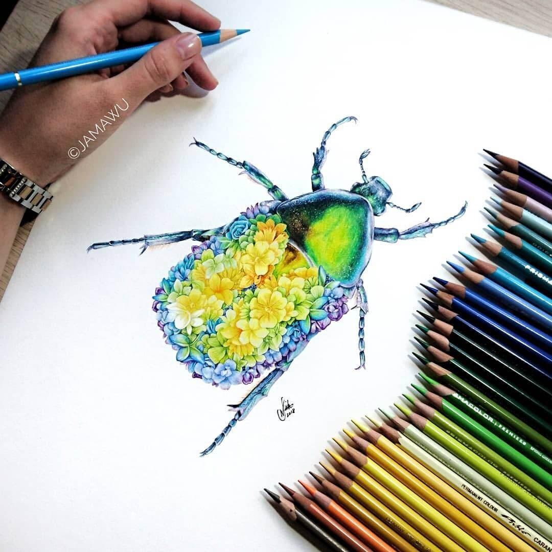 03-Flower-Beetle-J-Wuiz-Animals-and-Food-Art-Pencil-Drawings-www-designstack-co