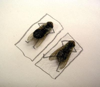 Resultado de imagem para largado às moscas
