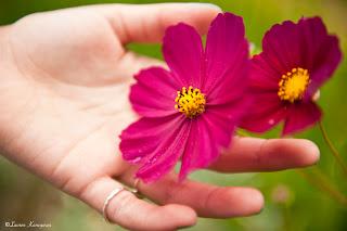 imagen mano+flor+amistad