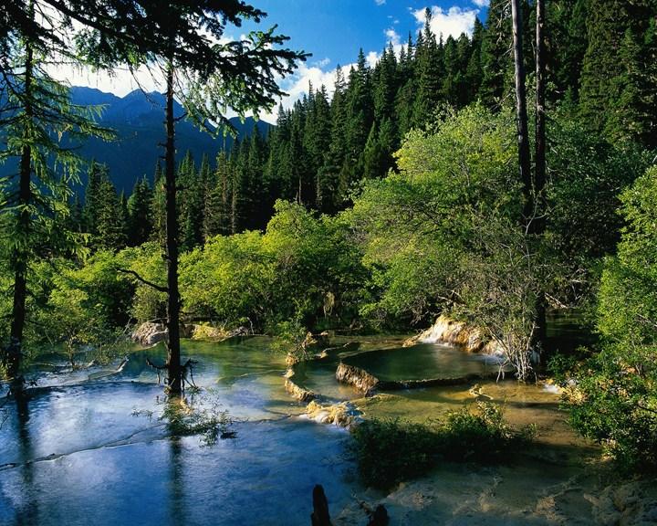 göl resimleri orman manzara fotoğrafı