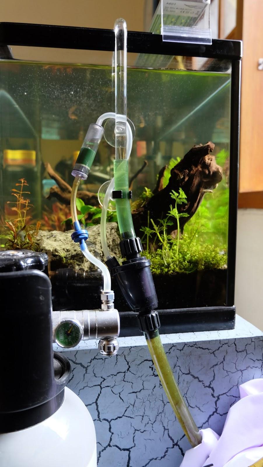 Cara Membuat Aquascape Sederhana Untuk Pemula