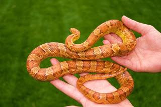 jual beli ular reptil x, jual beli reptil ular, jual beli ular reptil x, jual beli reptil ular, jual beli reptil ular, jual beli reptil ular, reptil x jual beli ular, jual beli ular reptil x, reptil x jual beli ular,