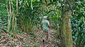 Organic Village Visit - Luxury Resorts in Kerala