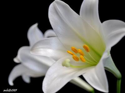 hoa hue dep nhat