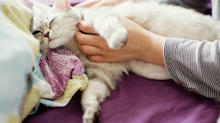 Taking care of your pregnant cat