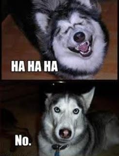 No Memes Dog Expressions