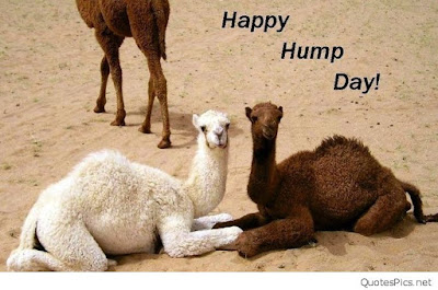 Happy Hump Day HD Images Happy Hump Day HD Images