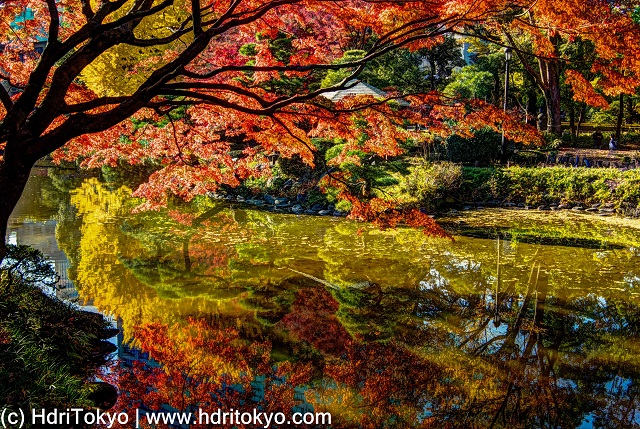 red leaves of Japanese maple and yellow leaves of ginkgo reflect on the water of the pond.