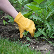 Weed Control Begins With Soil Preparation