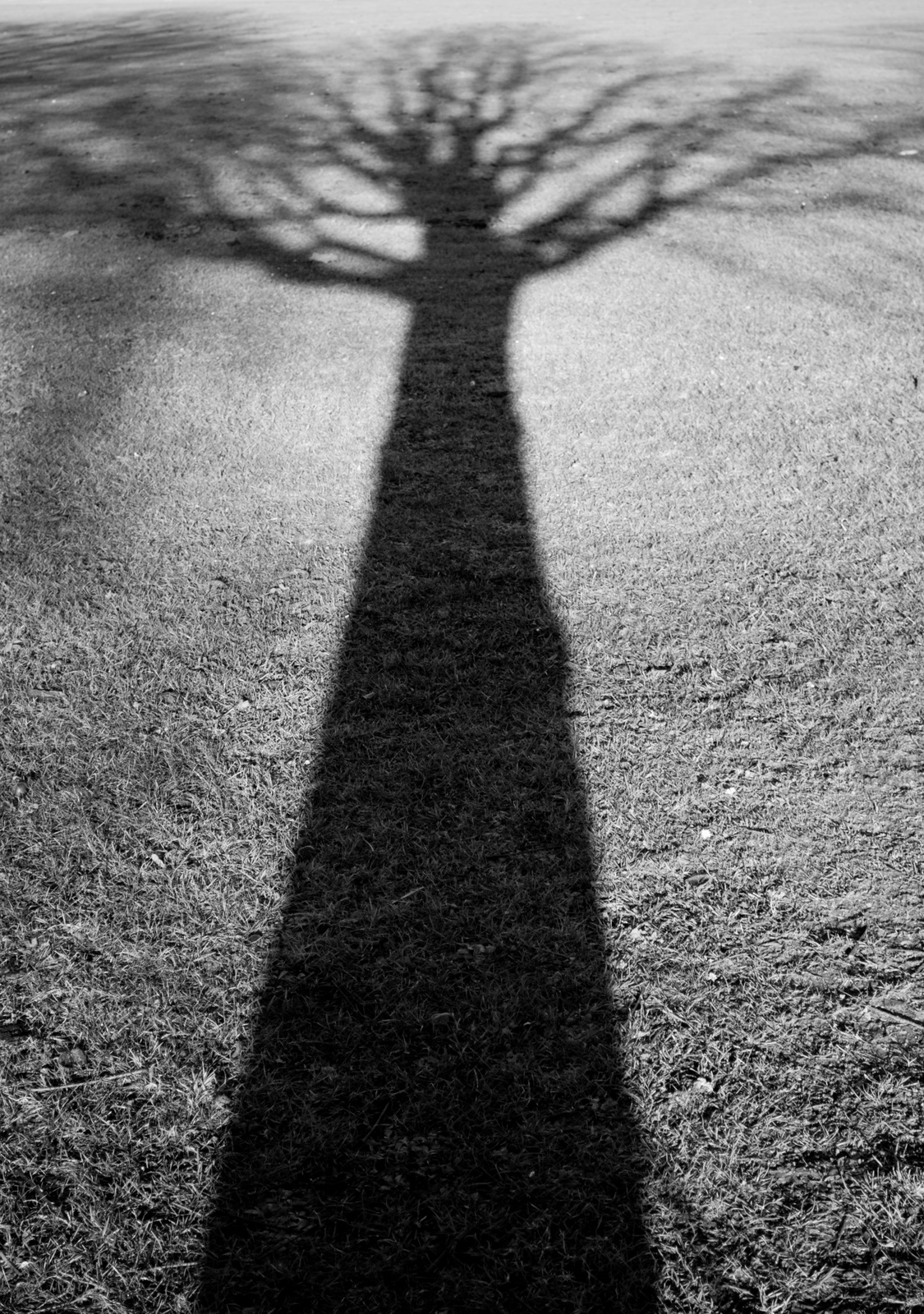Vancouver Daily Photo  Shadow Of A Tree