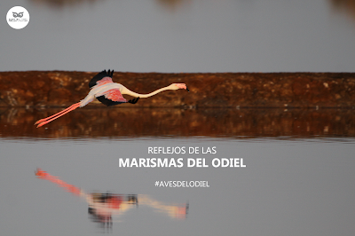 Marismas del Odiel