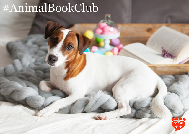 Celebrating two years of the animal book club. Here, a dog relaxes by a book.