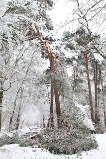 Chute de branche, Apremont, Fontainebleau 06 février 2018