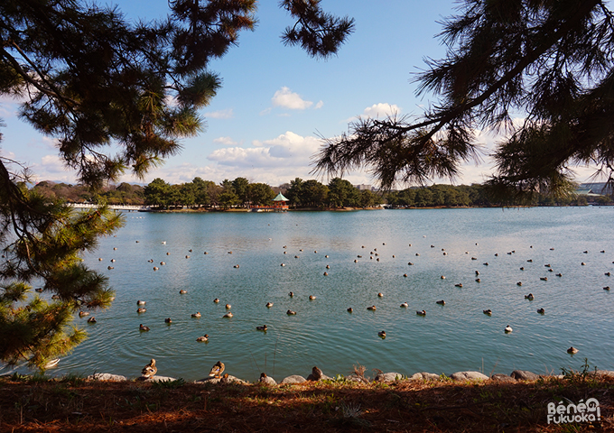 Parc Ohori, Fukuoka