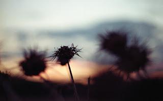 confusion, literary, landscape, experimental,
