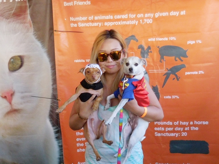 2016 Strut Your Mutt Los Angeles