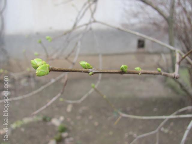 тематическое занятие - как весной просыпаются деревья