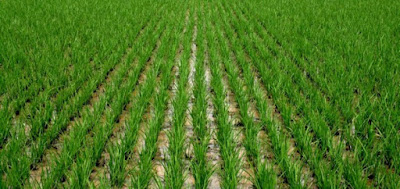 Thailand business group to invest $400m in agriculture in Anambra 1