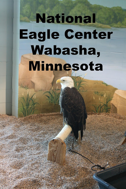 National Eagle Center in Wasbasha, Minnesota